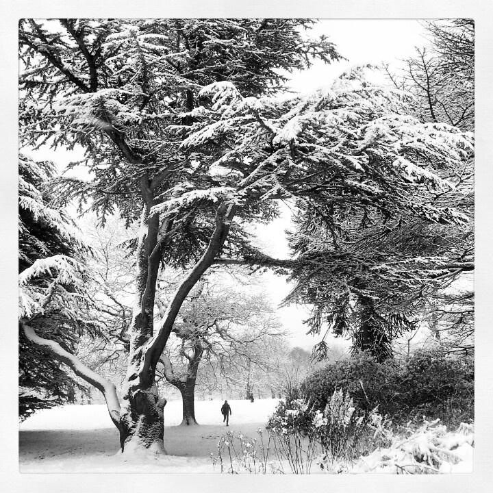Alfreton Park in Winter