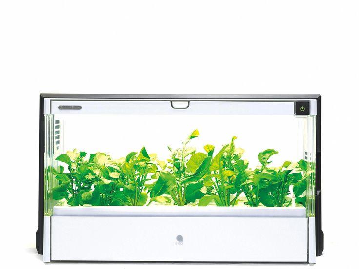 Aquaponics pdf aquaponicscheap grapecaregrowing with