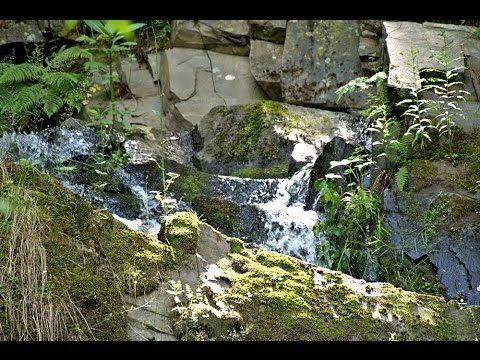 Wald und Wasser - Urlaub im Harz