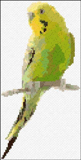 Green parakeet free download