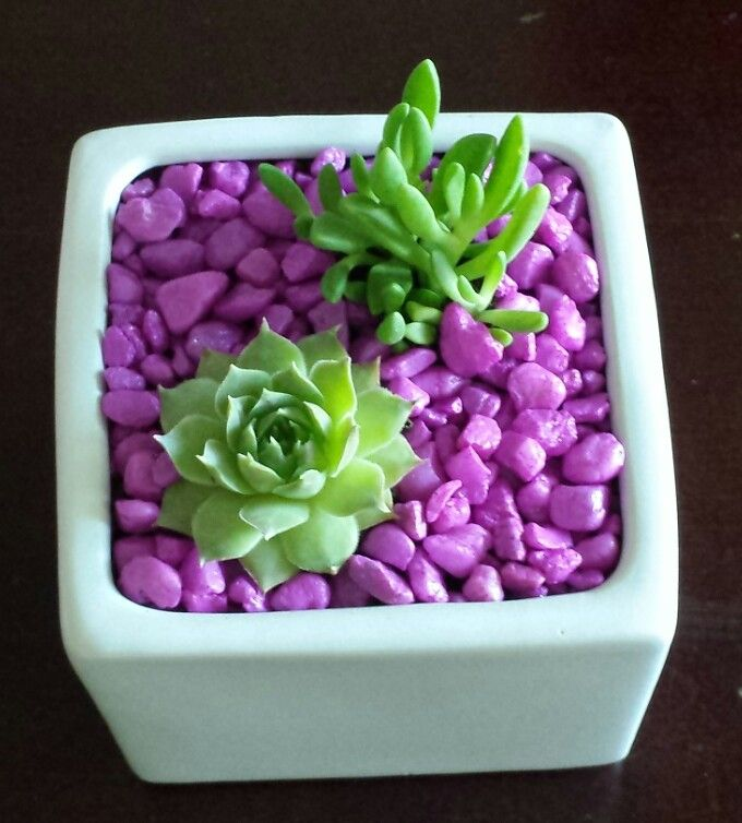 Small cheery succulent planting--white pot with pink stones.
