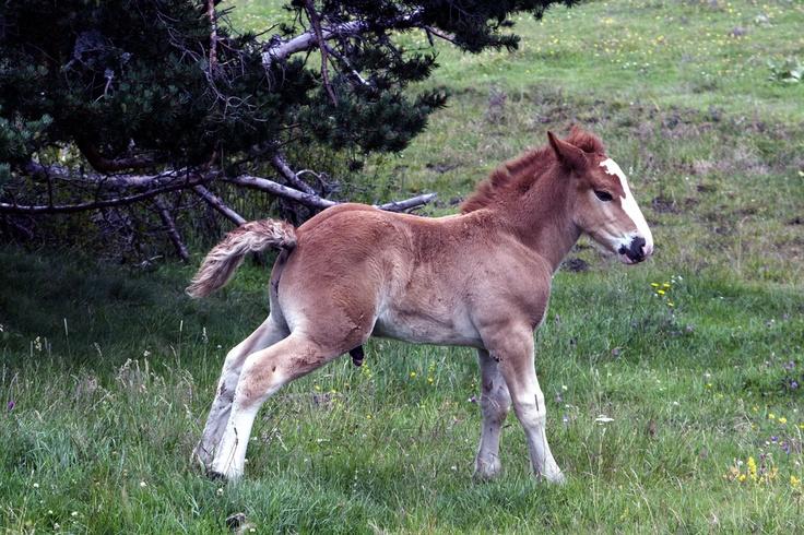 Horse - Bassa d'Oles (Vielha)