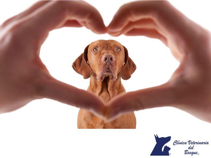 Causa de las enfermedades cardíacas en perros. CLÍNICA VETERINARIA DEL BOSQUE. Las causas de las enfermedades cardiacas en los perros son en el 90% adquiridas por virus, bacterias, factores nutricionales o tumores. Esto afecta principalmente a razas pequeñas y de edad avanzada. Si notas que tu mascota está decaída, sufre desmayos, tiene intolerancia al ejercicio o tos, tráela a la Clínica para realizar un diagnóstico y prescribir un tratamiento adecuado. #veterinaria