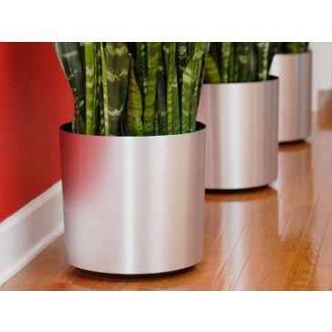 Pots For Indoor Plants. Set Of Indoor Plants In Pots Cacti And ...