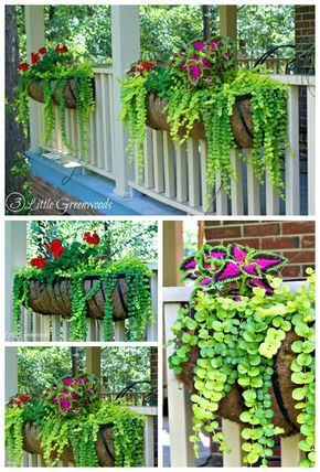 MUST PIN post for awesome curb appeal! Best ideas for hanging baskets to turn your front porch planters into instant WOW! DIY flower baskets that you can make this weekend! // 3 Little Greenwoods