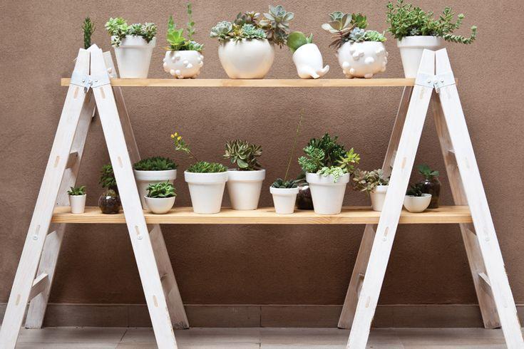 estantería formada por tablones sobre dos escaleras con una colección de suculentas y crasas