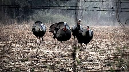 Epic Realtree Video of 26 Turkey Hunting Kills in Two Minutes Preview Image