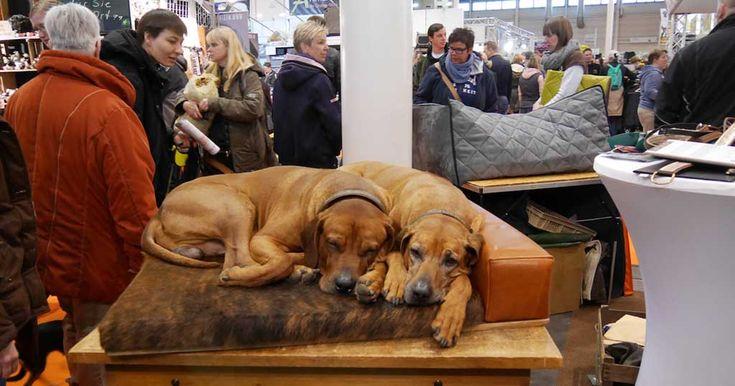 Im MCC Halle Münsterland drehte sich am vergangenen Wochenende bereits zum zehnten Mal alles um den Hund