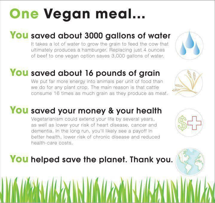 Just one vegan meal saves this much water, grain, money & your health.