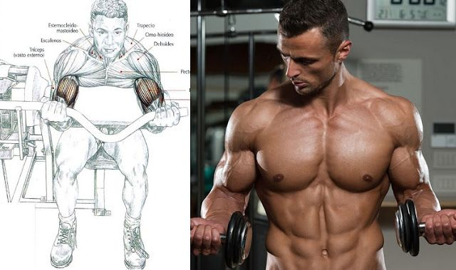 How to Get Big Biceps