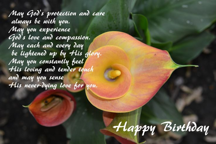 Happy Birthday - Calla lily