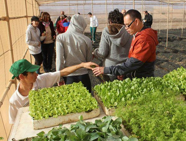 Medio millón de euros en las subvenciones de Fuerteventura para 23 programas de atención social
