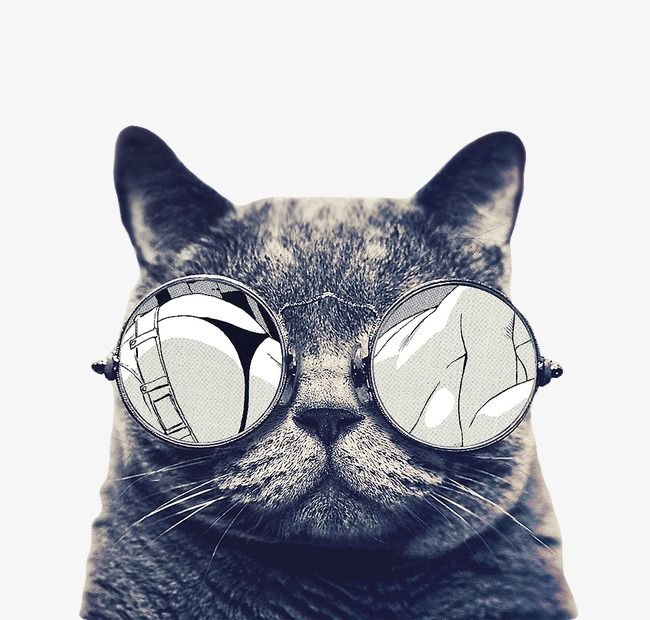 Millones De Imagenes Png Fondos Y Vectores Para Descarga Gratuita Pngtree Kitten Pictures Cats Cats And Kittens