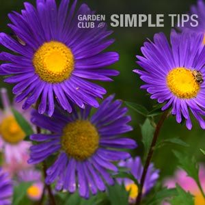 Plant Nonstop Color with Fall FlowersGarden Club