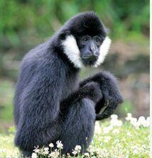 #cute #monkey