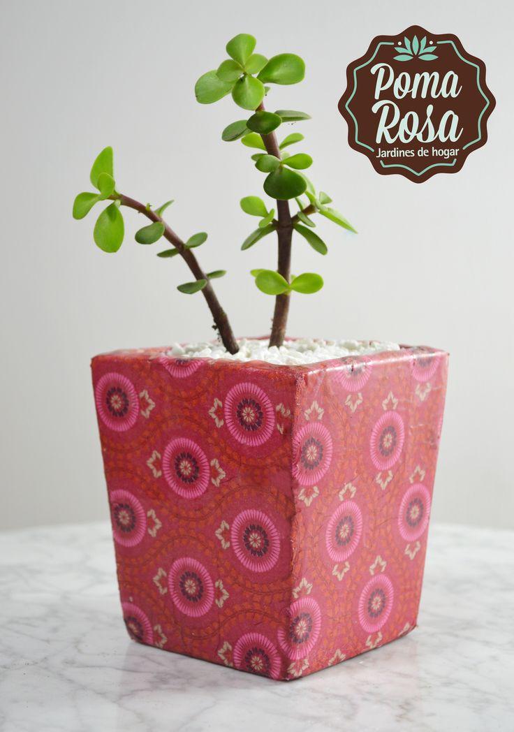 Las plantas traen muy buena energía al hogar.. Dales mucho amor para que crezcan sanas y hermosas! Planta: suculenta  Tenemos domicilios a todo Medellin! #suculentas https://www.facebook.com/pomarosajardin