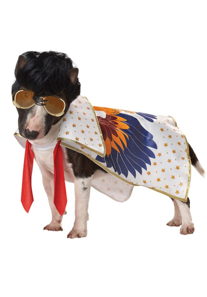 Funny Dog Costumes | most funny dog costumes - View All