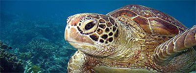 Swim with Turtles - Port Douglas