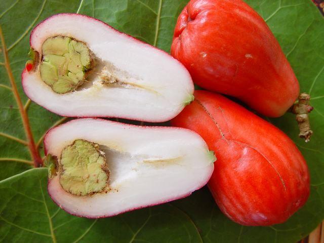 Malay apple fruit-Caribfruits - Pomme malacca / Fruits des Antilles. L'un de mes fruits préférés !!!!!!!!!!!!!!!! #yummi