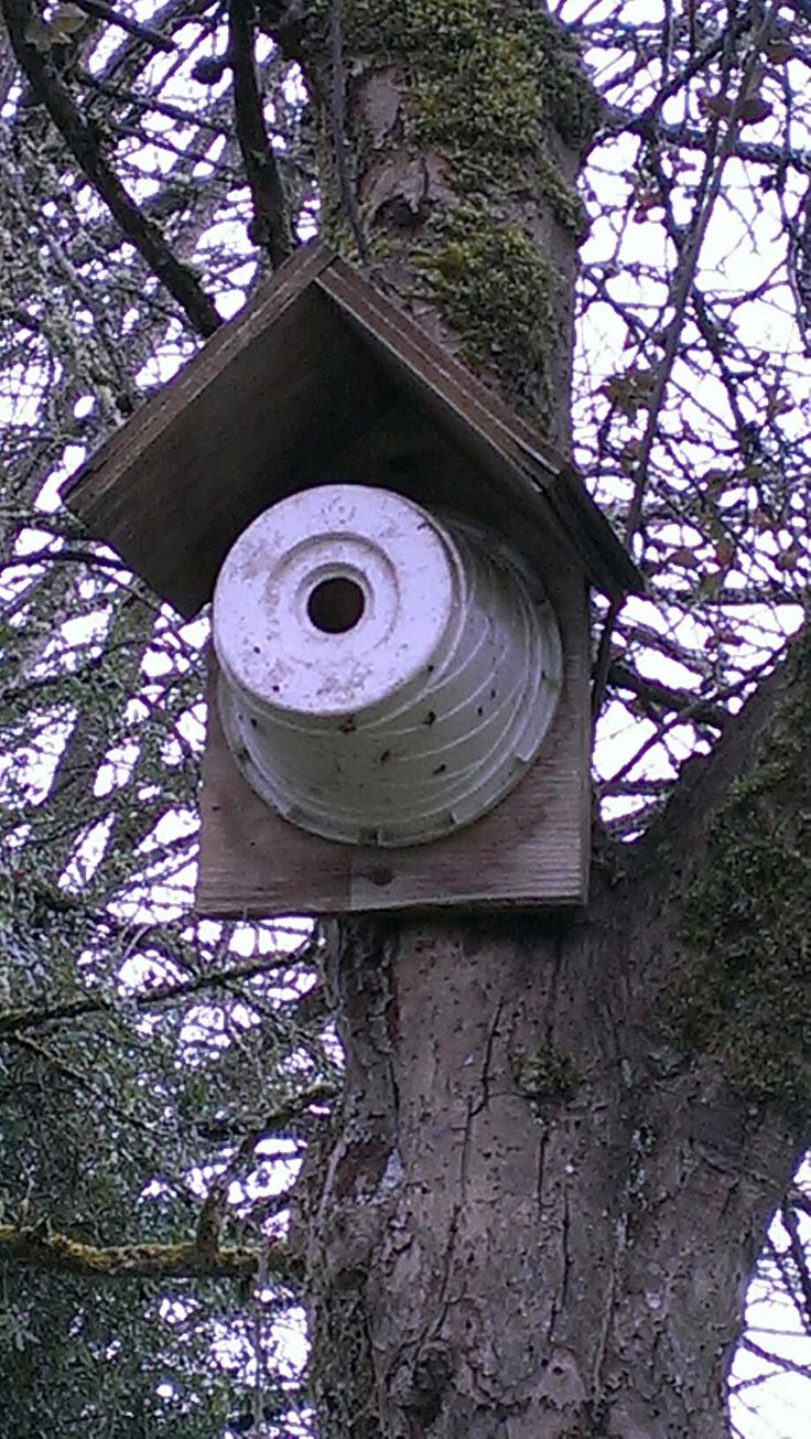 This is brilliant! . . . Flower Pot Bird House