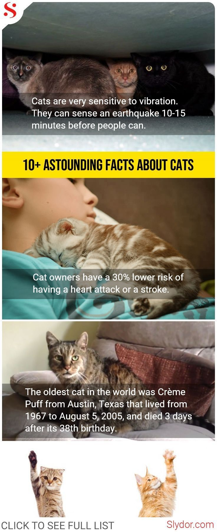 Facts About Cats That Will Stun You For A Moment Facts Animals Cats Catslover Love Wtffacts Unbelievale Stf Slyd Cat Facts Cat Facts Funny Funny Facts