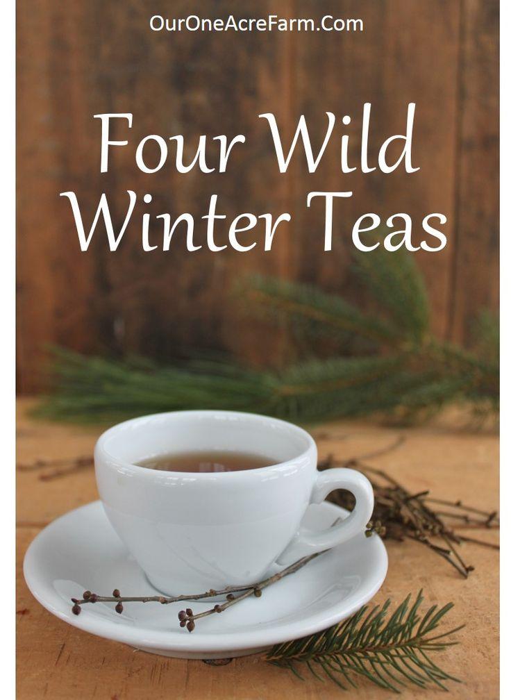 1000 Ideas About White Tea Benefits On Pinterest Tea