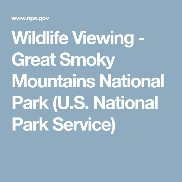 Wildlife Viewing - Great Smoky Mountains National Park (U.S. National Park Service)