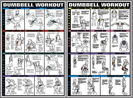 Weight Training Flexibility Poster Body Building Charts ...