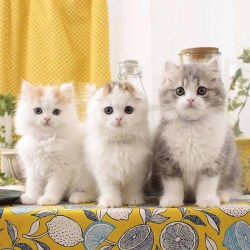 Three Angels ♡♡♡