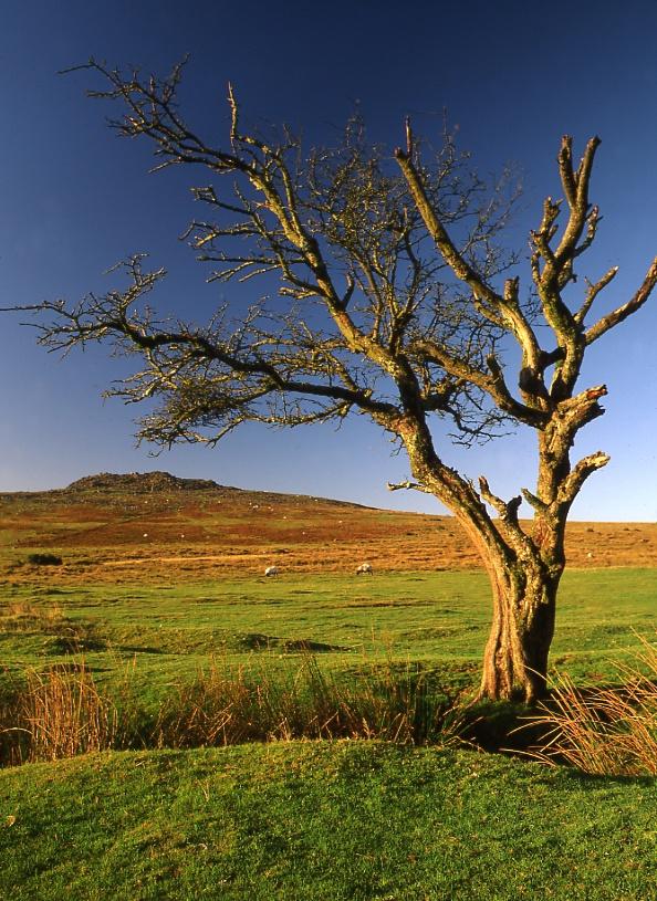 Dartmoor, Devon, UK.