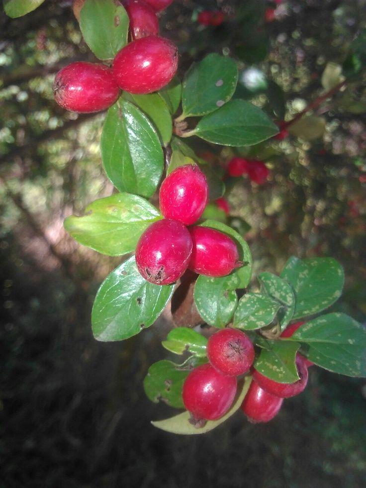 Fall Nature Photo 2k17