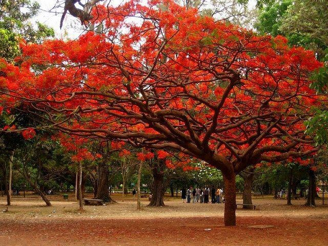 17 best images about paisajes de tabasco mexico on for Arbol de fuego jardin