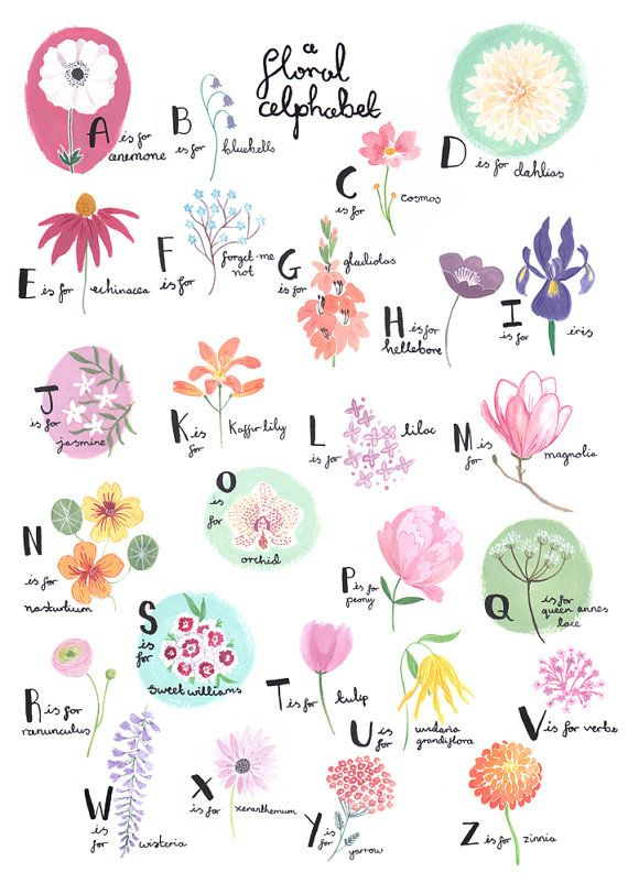 This is a professionally printed A3 art print of my original hand painted floral alphabet. Perfect for gardeners and flower lovers! If you would