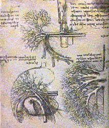 Disegno di Leonardo da Vinci raffigurante alcuni organi interni del corpo umano con strutture riconducibili ai frattali