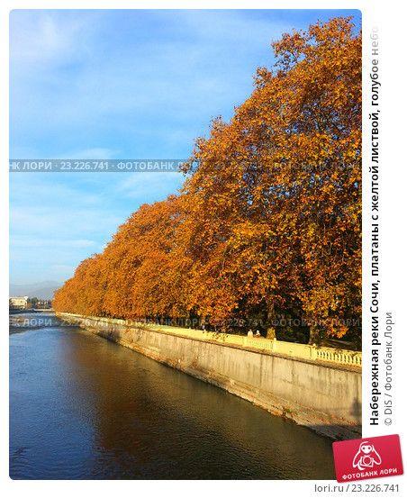 Набережная реки Сочи, платаны с желтой листвой, голубое небо с белыми облаками, фото № 23226741, снято 4 ноября 2013 г. (c) DiS / Фотобанк Лори