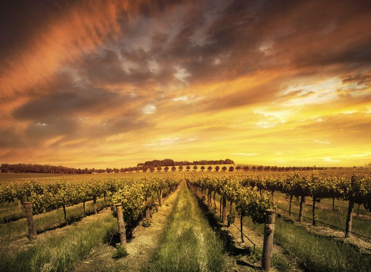 The Barossa Valley, South Australia. | 29 Places That Should Be On Every Aussie's Bucket List
