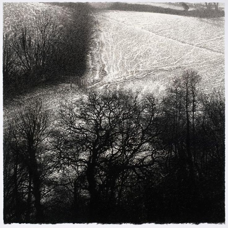 """Oaks and Light Snow by Sarah Gillespie - Charcoal on Arches paper 26"""" x 26"""""""