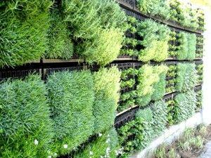 Orti verticali #100in1MI #100in1day #Whatif #milan #inspiration #enjoyMI #città #rigenerazioneurbana #garden #ortiurbani