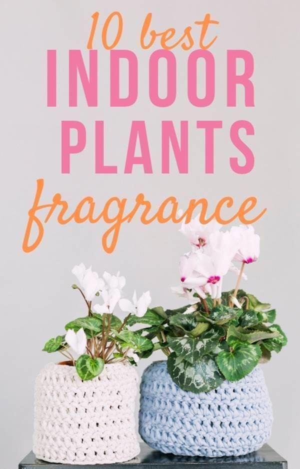 10 Of The Best Smelling Fragrant Flowers To Have Around Your House Plants Indoorplants Indoorgarden Zimmerpflanzen Zimmerpflanzen Ideen Hangepflanzen Zimmer
