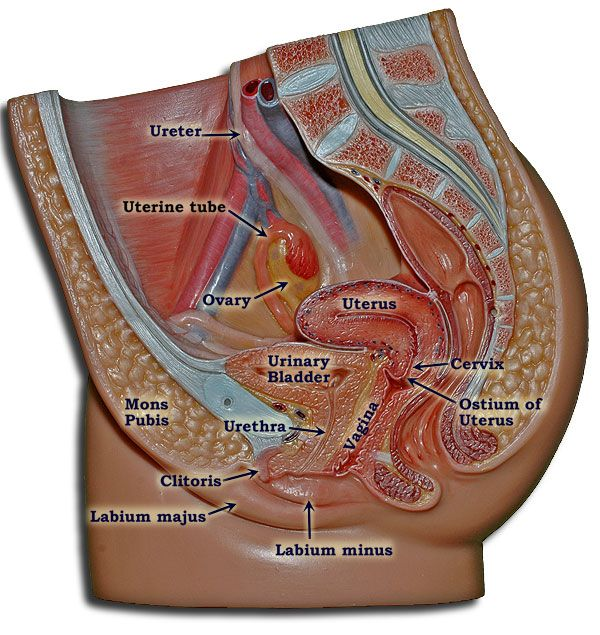 513 Best Anatomy And Physiology Images On Pinterest The Human Body