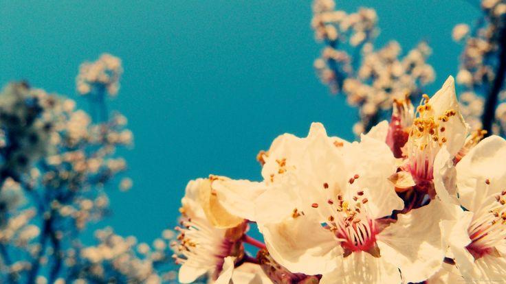 vintage flowers desktop wallpaper