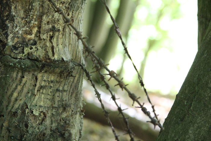 Barbed Wire in Tree