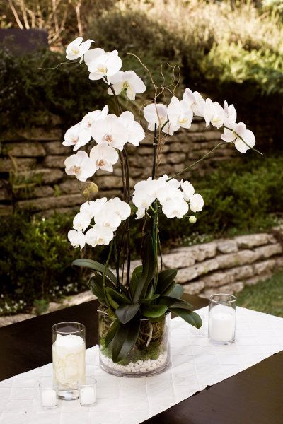 style me pretty - real wedding - usa - california - laguna beach wedding - the bride's brother's home - reception decor - centerpiece - phalaenopsis orchids                                                                                                                                                      More