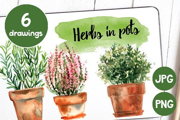 Watercolor herbs and flowers in pots