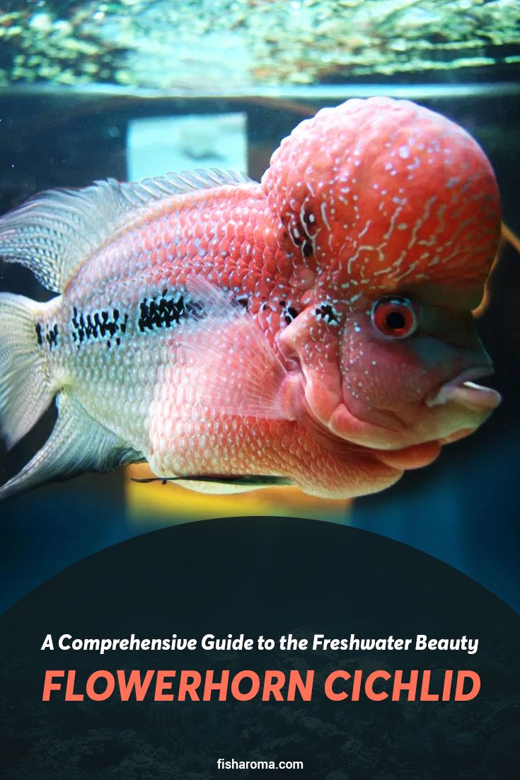 A Comprehensive Guide to the Freshwater Beauty