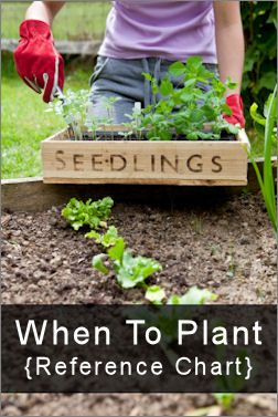 When to plant. . .Plants Seedlings, Gardens Ideas, Green Thumb, Plants Vegetables, Plants Reference, Plants Charts, Transplant Seedlings, Reference Charts, Plants Guide