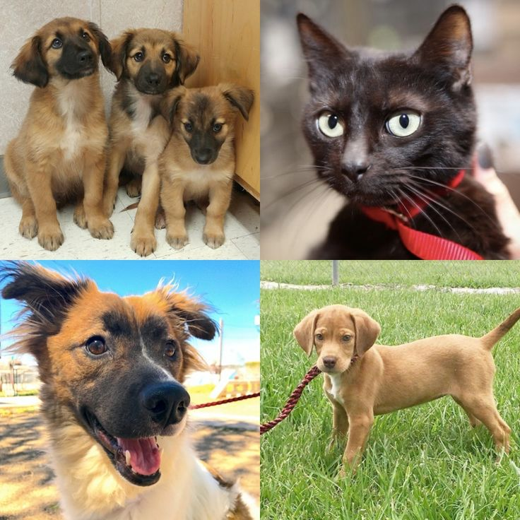Next Flight! In Lafayette, 150 Dogs & Cats Are Waiting for Their Flight to Freedom