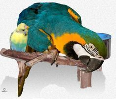 How To Tame Your Wild Or Aggressive Biting Parrot - Dealing With Unwanted Behavior In Your Pet Parrot