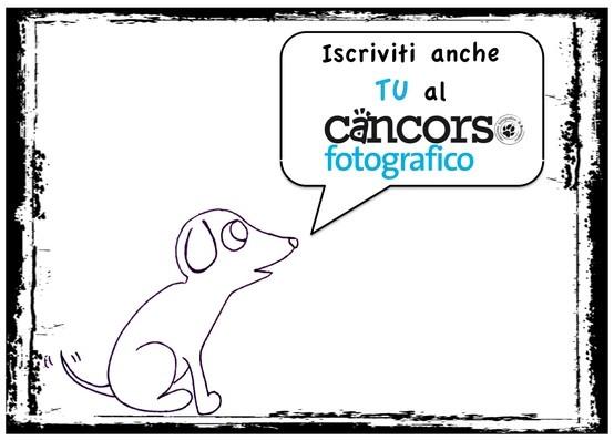 www.cancorso.it, cancorso, ilcancorso, cane, cani, concorso, concorsi, contest, ilmessaggero, quotidiano, animali, storie, canstorie, coppie, cancoppie, animale