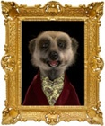 aleksandr orlov - head of compare the meerkat. Not to be mistaken with comparethemarket.com